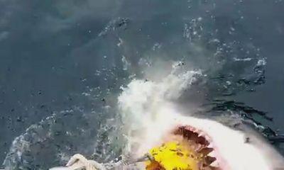 Hãi hùng cảnh cá mập trắng khổng lồ tấn công tàu nhỏ