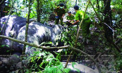 Tiếng kêu cứu của đàn voi từ núi rừng Tây Nguyên