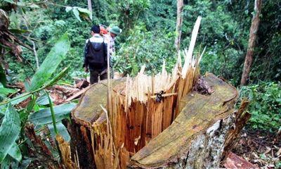 Khởi tố Phó Giám đốc thuê người phá rừng