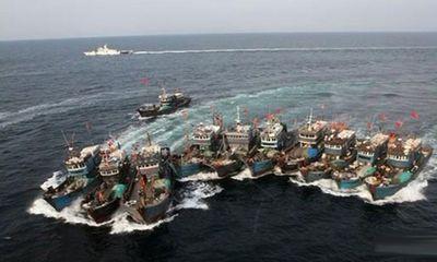 Gần 9.000 tàu cá Trung Quốc tiến ra Biển Đông