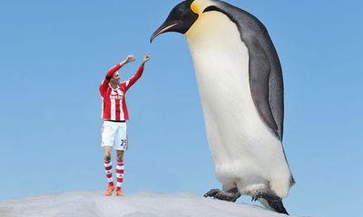 Phát hiện loài chim cánh cụt khổng lồ cao hơn người