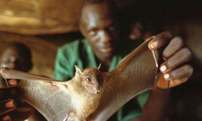 Hơn 1 triệu người sắp chết đói vì Ebola ở Tây Phi