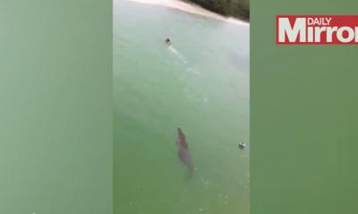Thót tim với cảnh cá sấu khổng lồ truy sát người bơi dưới sông