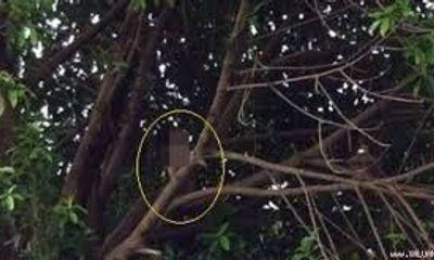 Phú Yên: Một phụ nữ treo cổ tự tử trên giàn bí