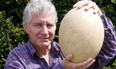 Quả trứng chim voi 500 tuổi giá hơn 80.000 USD