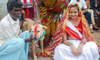 Cô gái Ấn Độ bị ép phải cưới... chú chó để tránh tai ương