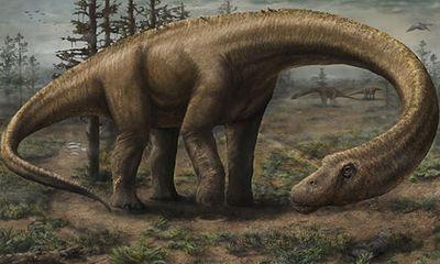 Phát hiện loài khủng long kích thước lớn hơn cả máy bay Boeing
