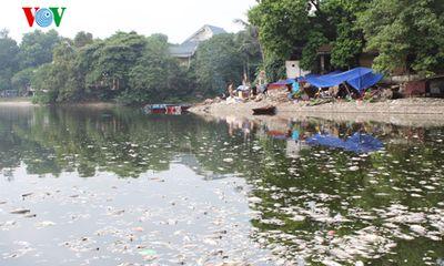 Cá chết trắng hồ Thiền Quang, người đi đường phải bịt mũi