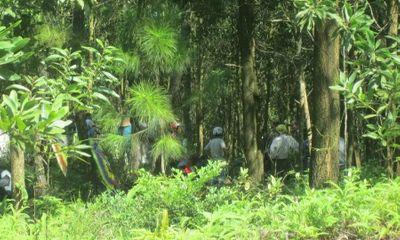Phát hiện thi thể phân hủy còn trơ bộ xương trong rừng