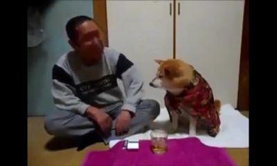 Chú chó thông minh, ngăn cản chủ nhân uống rượu say