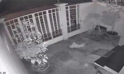 Hai người đàn ông dùng súng điện trộm chó trong đêm