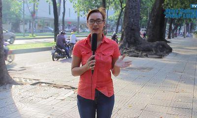 TP.HCM: Tiếp tục đốn hạ cây xanh để xây dựng cầu Thủ Thiêm 2