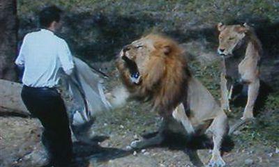 Clip: Thót tim cảnh động vật tấn công con người