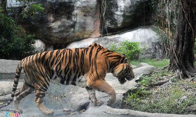 Vườn thú tiền tỷ trong khu du lịch Đại Nam của ông Dũng