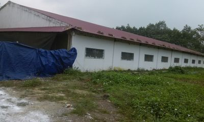 Thanh Hóa: Thêm một trại nuôi lợn gây ô nhiễm môi trường