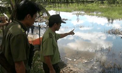 Khẩn trương săn lùng cá sấu sổng chuồng ra hồ Trị An