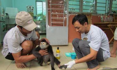Chung tay bảo vệ động vật hoang dã