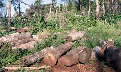 Dừng khai thác gỗ rừng tự nhiên trên cả nước