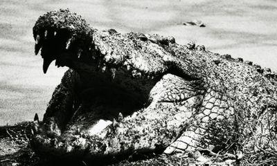 Video: Huyền thoại cá sấu khổng lồ đã giết hại hàng trăm người