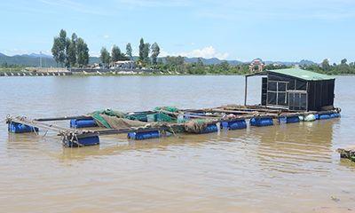 Thương lái thu mua bất thường hàng chục tấn cá chết ở Quảng Bình