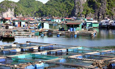 Bổ sung kinh phí cho 22 địa phương phát triển thủy sản