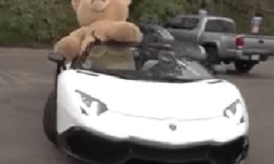 Lamborghini Aventador chở gấu khổng lồ trên phố