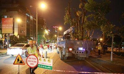 Trắng đêm di dời cây trên đường Kim Mã trước khi bão số 7 đổ bộ