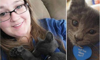 Chỉ với một chú mèo, chàng trai đã cầu hôn thành công bạn gái