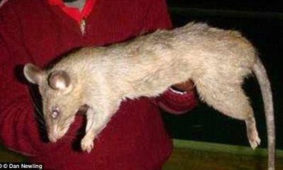 Mẹ đi dự tiệc xuyên đêm, con gái 3 tháng tuổi bị chuột