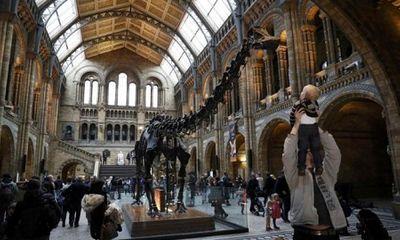 Bảo tàng Anh chính thức dỡ bỏ xương khủng long Dippy
