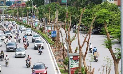 Hà Nội trồng 800.000 cây xanh dịp Tết Nguyên đán 2017