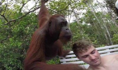 Đười ươi tát vào mặt thanh niên chụp ảnh 'tự sướng'