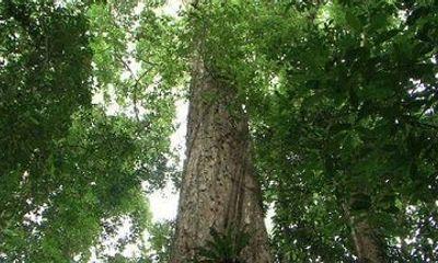 Nỗ lực bảo vệ và phát triển rừng nơi miền biên viễn