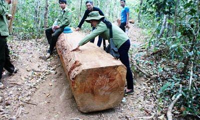 Điều tra vụ lâm tặc táo tợn cướp gỗ bất chấp lực lượng kiểm lâm nổ súng