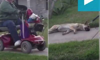 Người đàn ông bị bắt vì buộc chó béc giê kéo lê trên đường