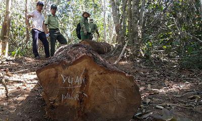 Bịa chuyện lâm tặc cướp gỗ, 7 cán bộ kiểm lâm bị kỷ luật