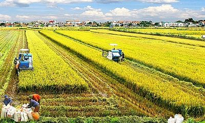 Thêm nhiều đối tượng được miễn thuế sử dụng đất nông nghiệp