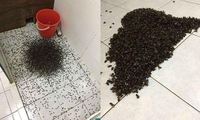 Chủ nhà 'khóc thét' khi mở vòi sen, hàng ngàn con ong lao ra như phim kinh dị