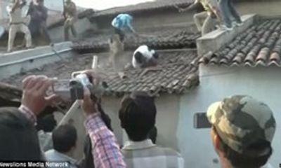 Báo sổng chuồng vồ kiểm lâm trên mái nhà