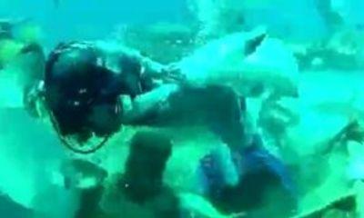 Hãi hùng cảnh thợ lặn bị cá mập cắn vào chỗ hiểm