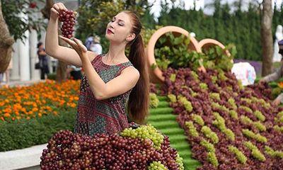 Lạc trong thế giới của rượu vang và những niềm vui ở Bà Nà Hills