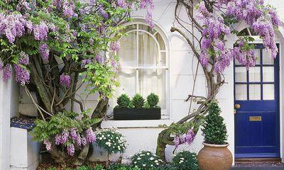 Trồng những cây này, nhà đẹp như tranh, vừa mát lại tốt cho sức khỏe
