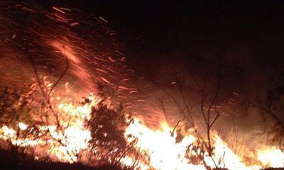 Rừng thông 30 tuổi ở Thanh Hóa bốc cháy dữ dội trong đêm