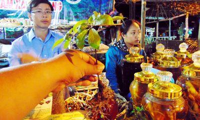 Quảng Nam mở chợ bán sâm Ngọc Linh mỗi tháng một lần