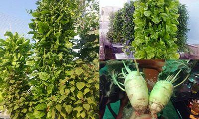 Ngắm vườn rau vô địch Sài thành của ông bố trẻ, cứ 1m vuông thu hoạch 40kg rau sạch