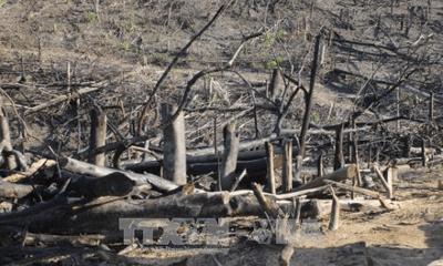 Khởi tố vụ phá hơn 20ha rừng phòng hộ tại Bình Định