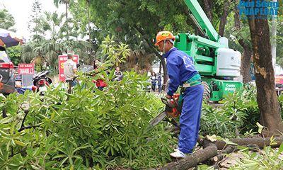 Bắt đầu di chuyển hàng cây xanh trên đường Phạm Văn Đồng