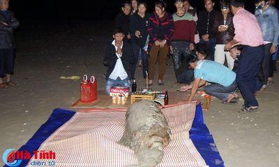 Hà Tĩnh: Phát hiện xác cá 'khủng', ngư dân làm lễ chôn cất