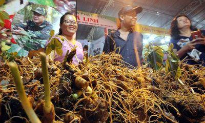 Choáng ngợp chợ sâm đắt đỏ nhất Việt Nam