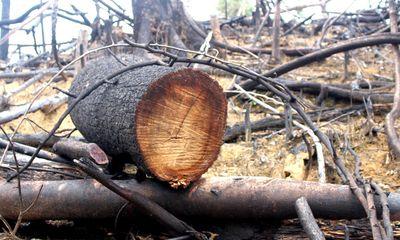 Vụ phá rừng ở Quảng Nam: Cách chức Chủ tịch xã
